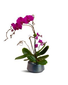 Modern Touch Orchids