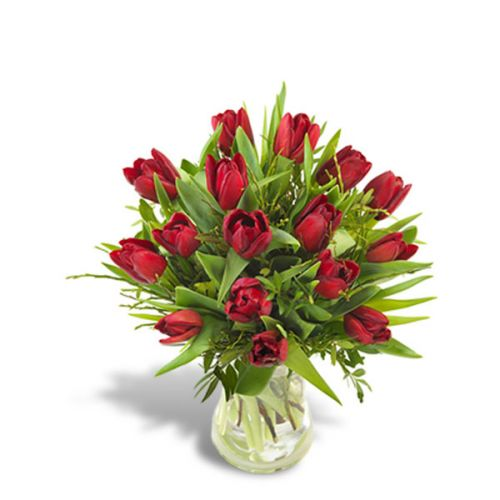Just Red Tulips