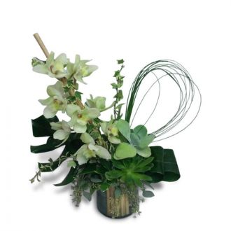 Tranquil Orchids